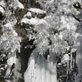 Photos: 氷の華咲く。