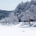 凍てつく湖畔の木々たち。