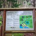 写真: 中島国有林