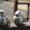 写真: 鳥1