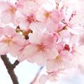 写真: Hello March♪