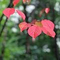 写真: 小さい秋♪