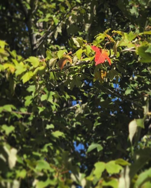 紅い葉っぱミッケ~♪