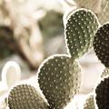 Photos: cactus2