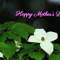 Photos: Happy Mother's Day!