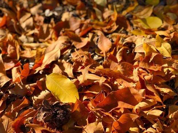 秋色の公園♪