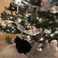 Christmas treeとMomoちゃん(o^^o)