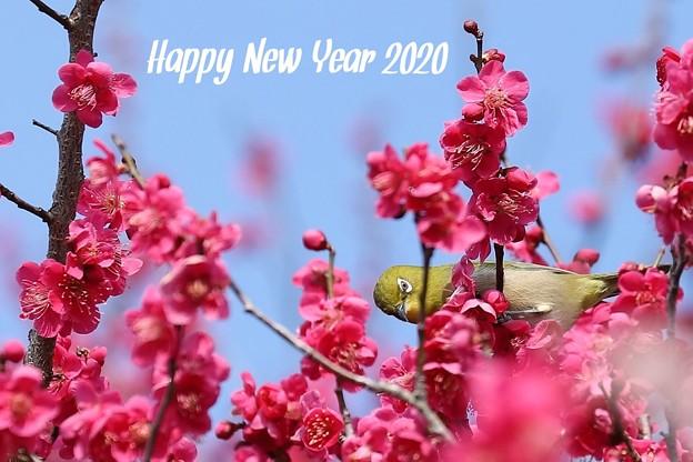 Photos: Hello 2020
