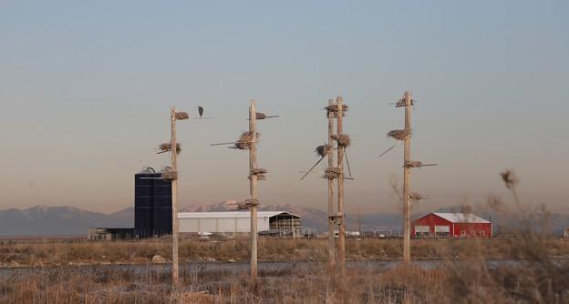 野鳥保護区。。Wild bird sanctuary
