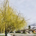 Spring in Uath