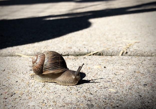 Photos: snail