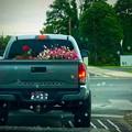 Photos: お花を運ぶTACOMA♪