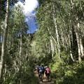 Photos: アスペンの森を通って。。