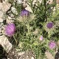 Photos: Wild flower