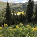 Photos: Yellow Wild Flower