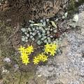 Twin Lakesのお花たち♪