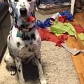 Photos: Happy National Dog Day!