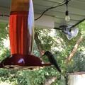 Photos: Hummingbird♪