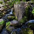 Photos: Creek