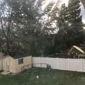 お隣の木。。@@!