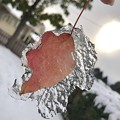Photos: 氷に包まれて。。