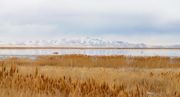 Farmington Bay