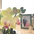 Photos: 蕾が咲き出しました~♪
