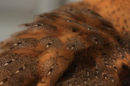 mame H21.3.7 もっふりした羽