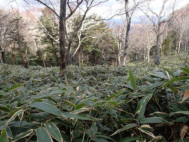 笹藪下降中