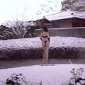 Photos: 雪を見る会