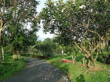 Suan_Luang_R9(ラマ9世公園) DSCN4776_R
