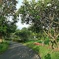 Photos: Suan_Luang_R9(ラマ9世公園) DSCN4776_R