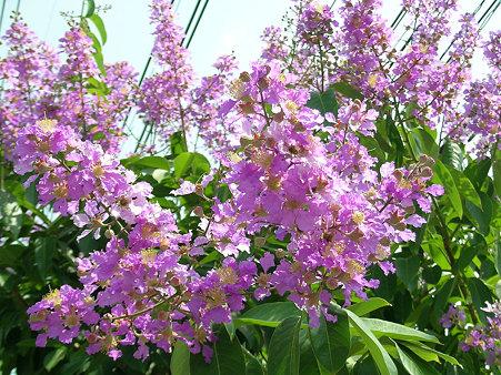 花いっぱいのチェンマイ(7) DSCN4895_R