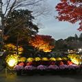 写真: しあわせの村日本庭園