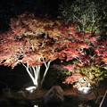 写真: しあわせの村ライトアップ