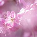 写真: 早春の陽射し