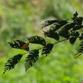 写真: on the leaves