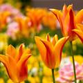 Photos: 春全開