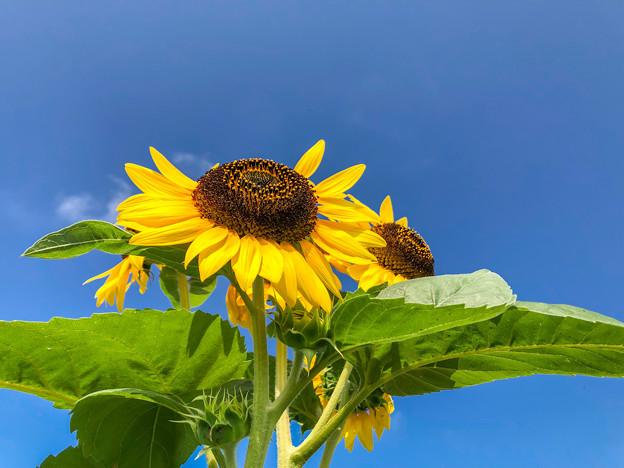 Photos: 夏真っ盛り