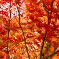 Photos: オールドレンズと紅葉狩り