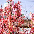Photos: お花見@天王洲