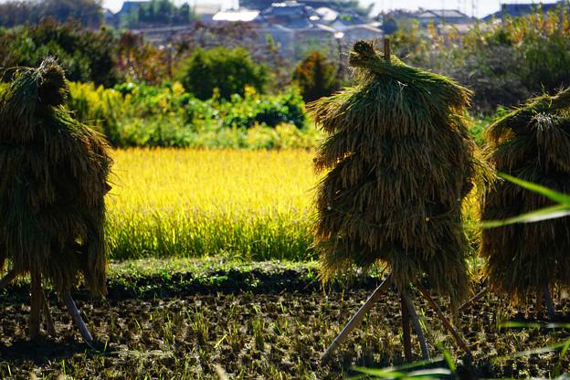 Photos: 秋の風物詩