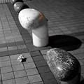 写真: 挑戦!ミルカマの世界3『おまえ、拾えや!』