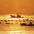 写真: 志津川湾の沖では