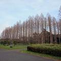 写真: 水元の木1