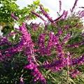 赤紫色の花