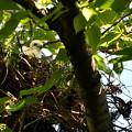 Photos: エサを待つ幼鳥
