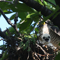 Photos: ツミの母子