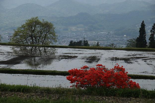 写真: 田んぼとツツジ 2017.5.12 上山市高野