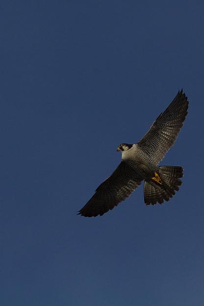 鳥は高く天空を舞い